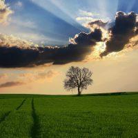 countryside - Fatherheart - France
