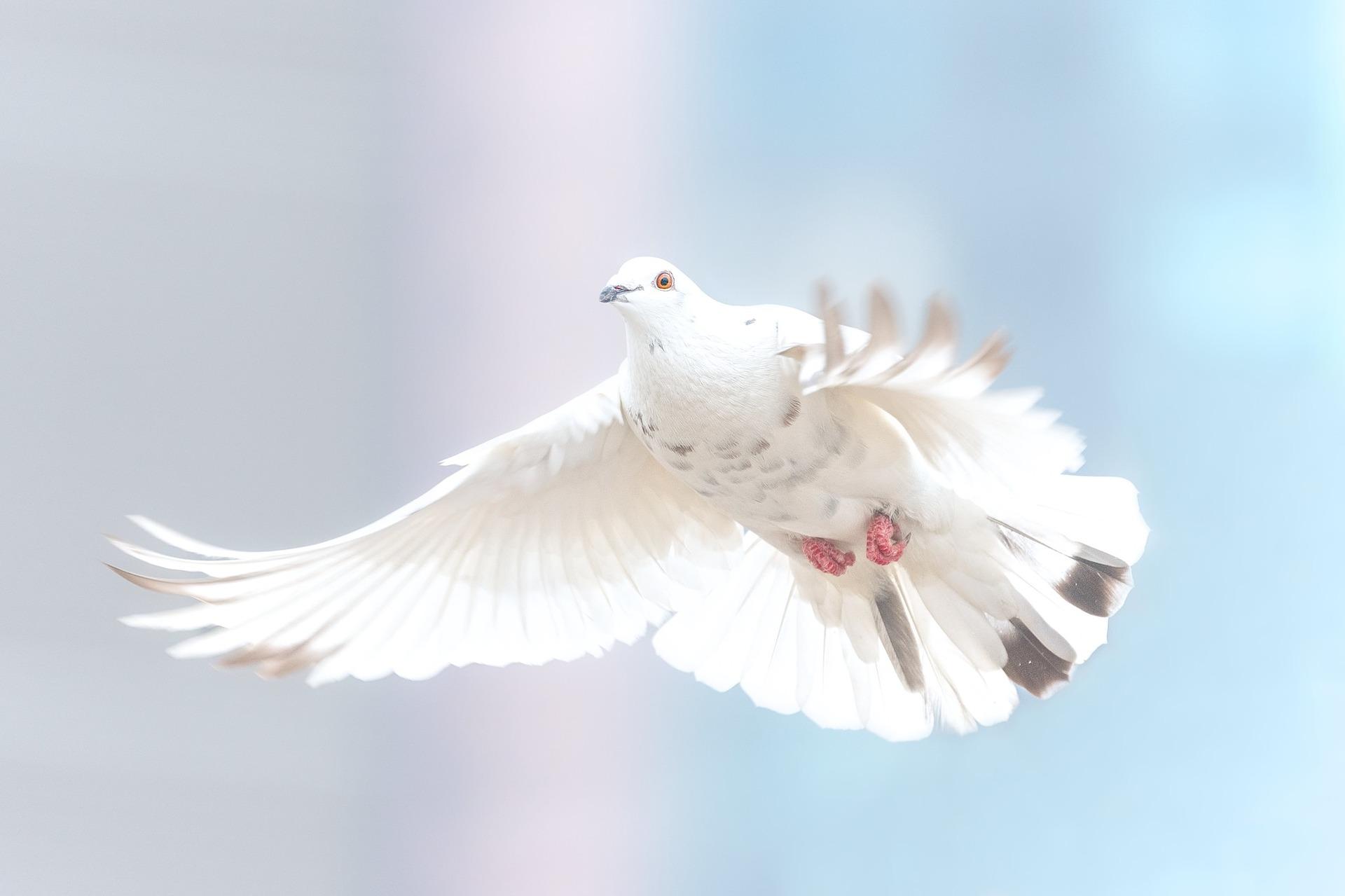 dove-Fatherheart - France
