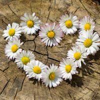 daisy-Fatherheart-France
