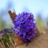 flower-Fatherheart-france
