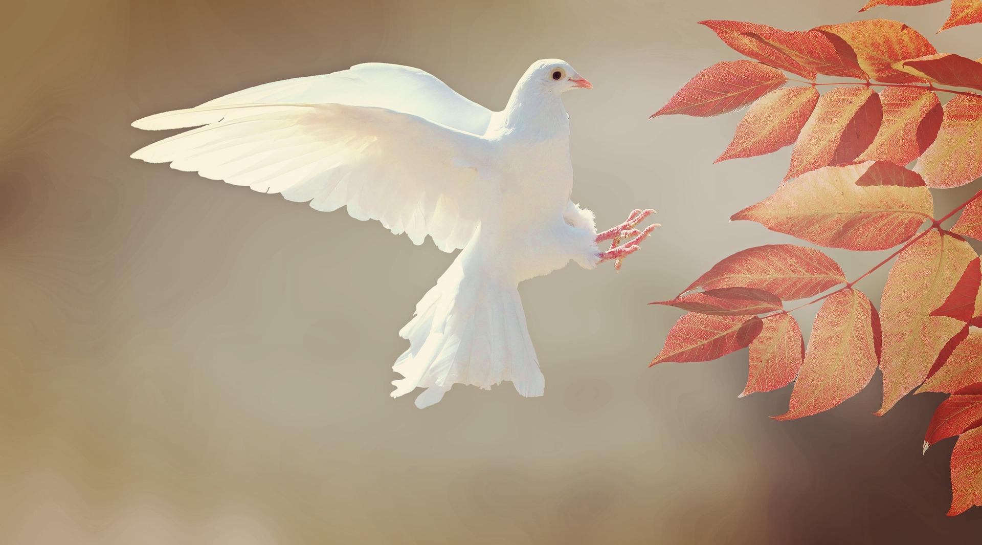 dove-Fatrherheart-France