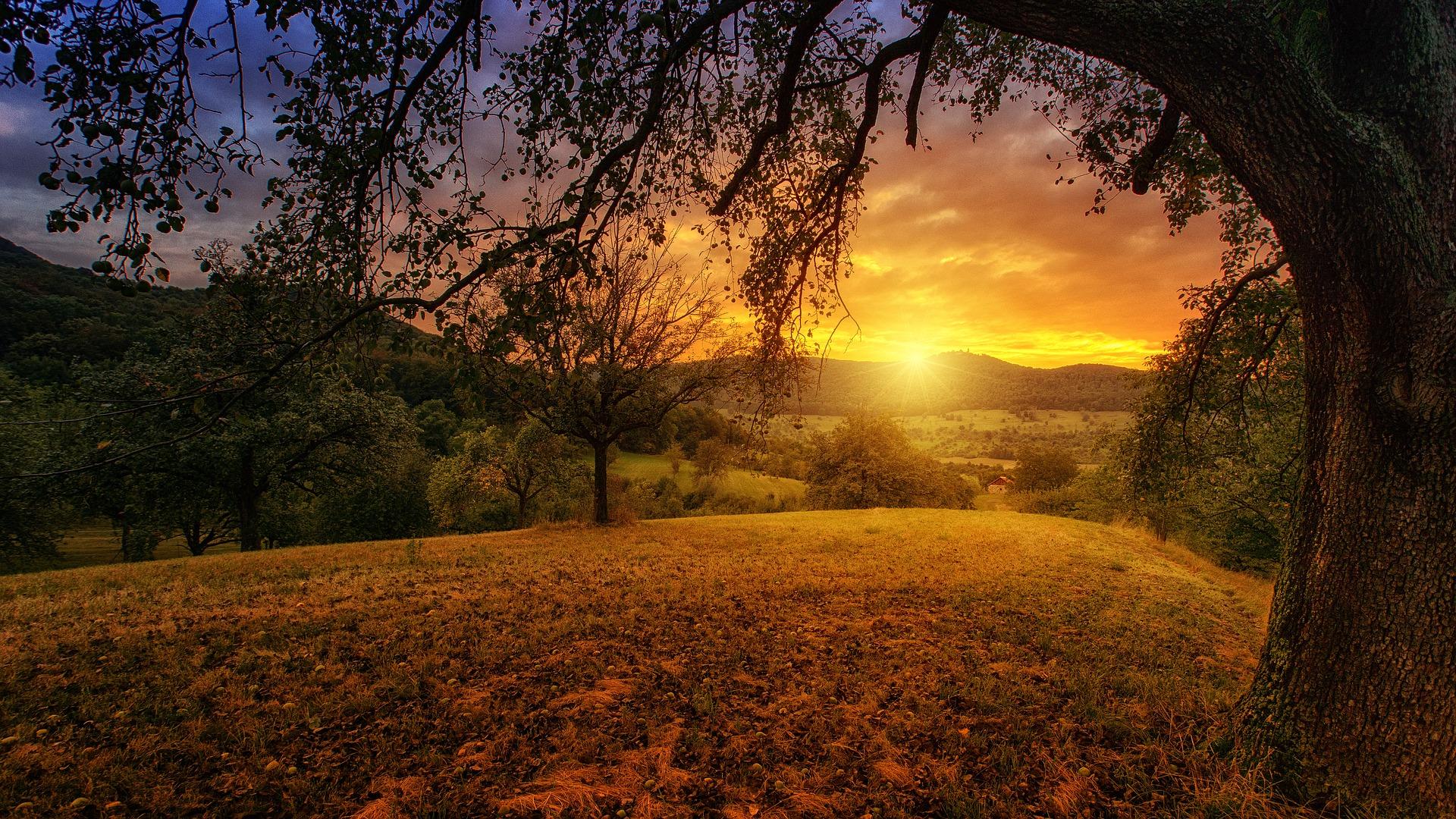 nature-Fatherheart - France