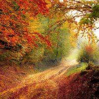 road-Fatherheart-France