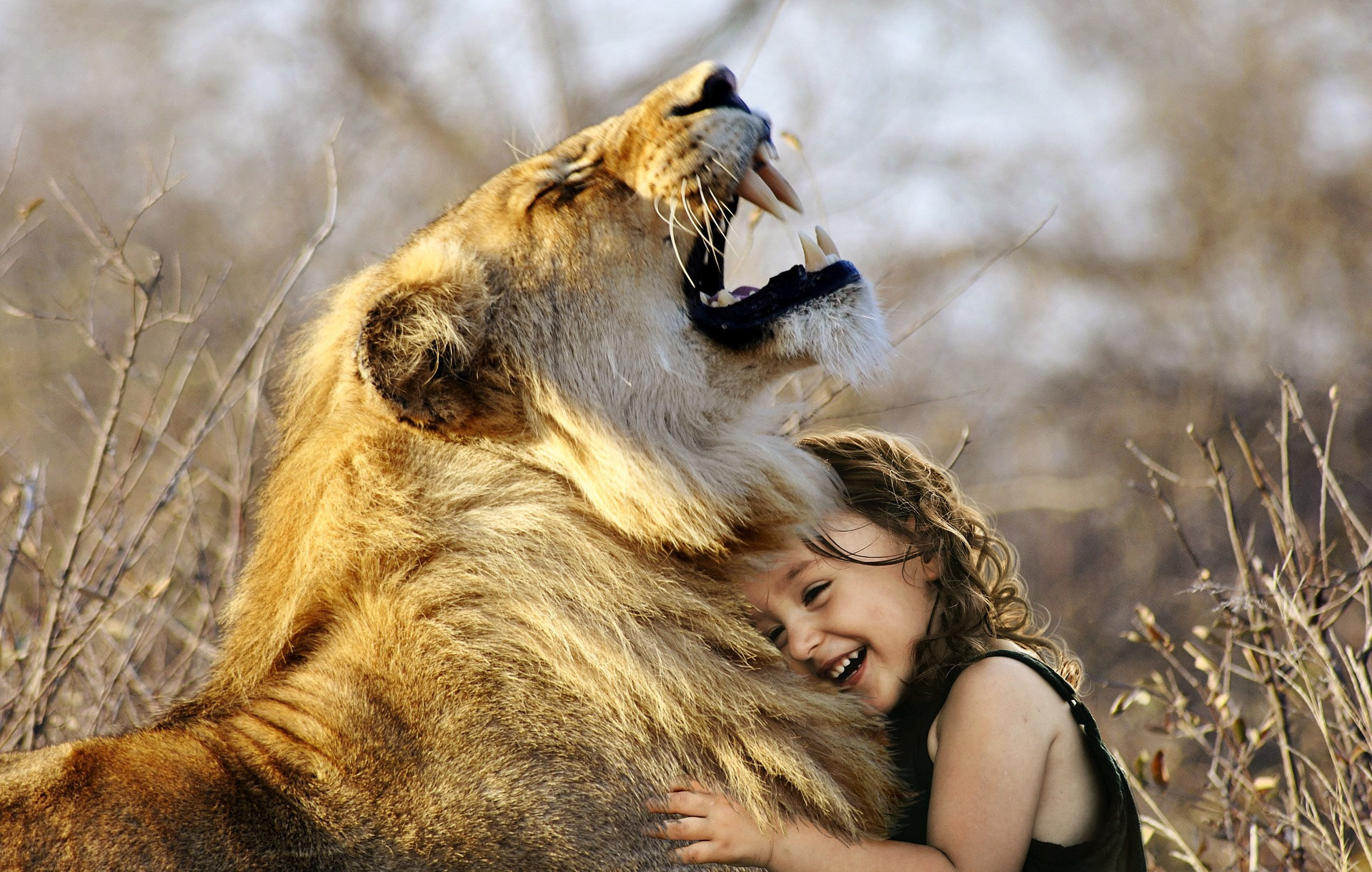 lion-Fatherheart - France