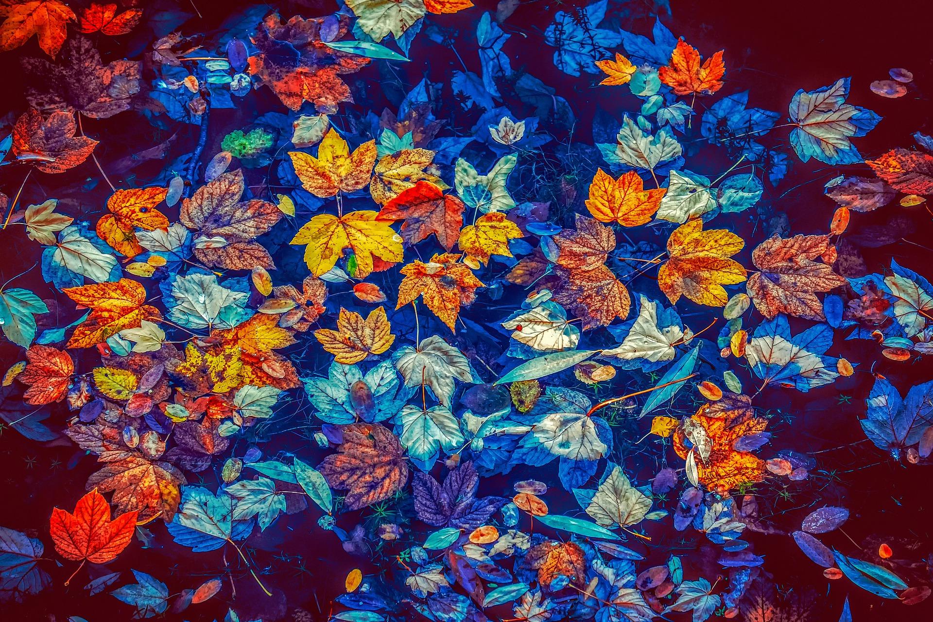 fall-leaves-Fatherheart-France