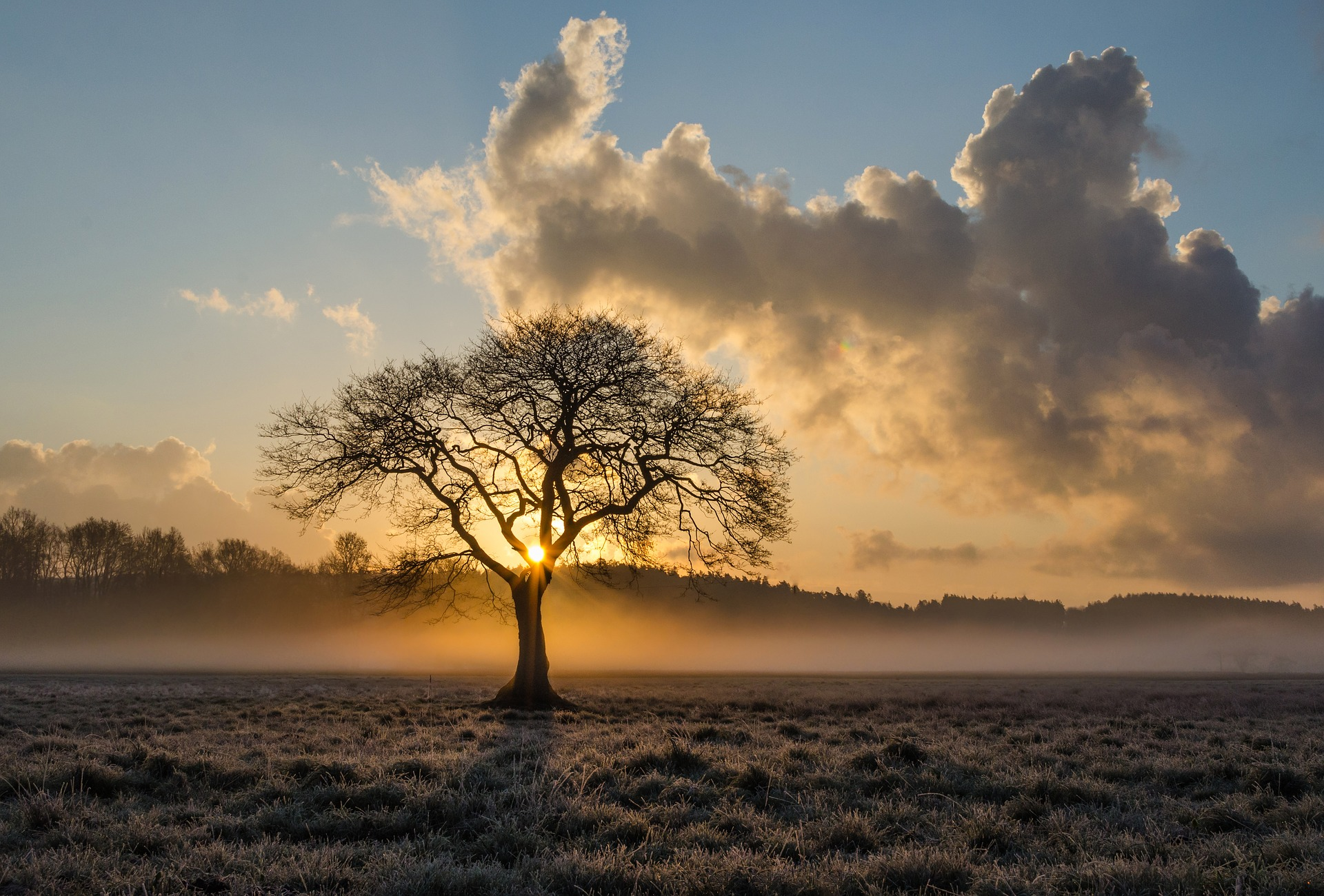 lone-tree-Fatherheart-France
