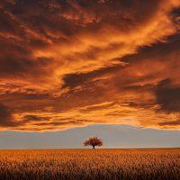 tree-Fatherheart-France