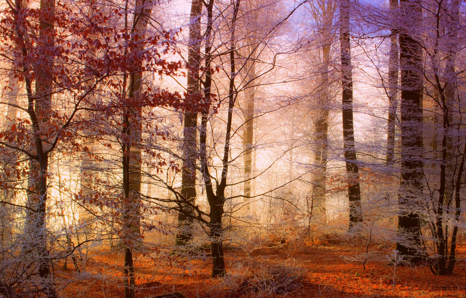 forest-Fatherheart - France