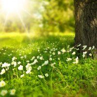 spring-Fatherheart-France